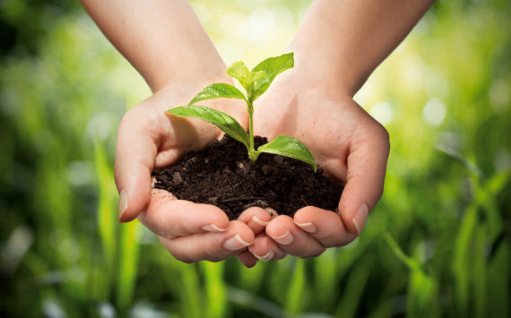 PANMOL® – patentierte Vitalstoffe aus Pflanzen und Erde