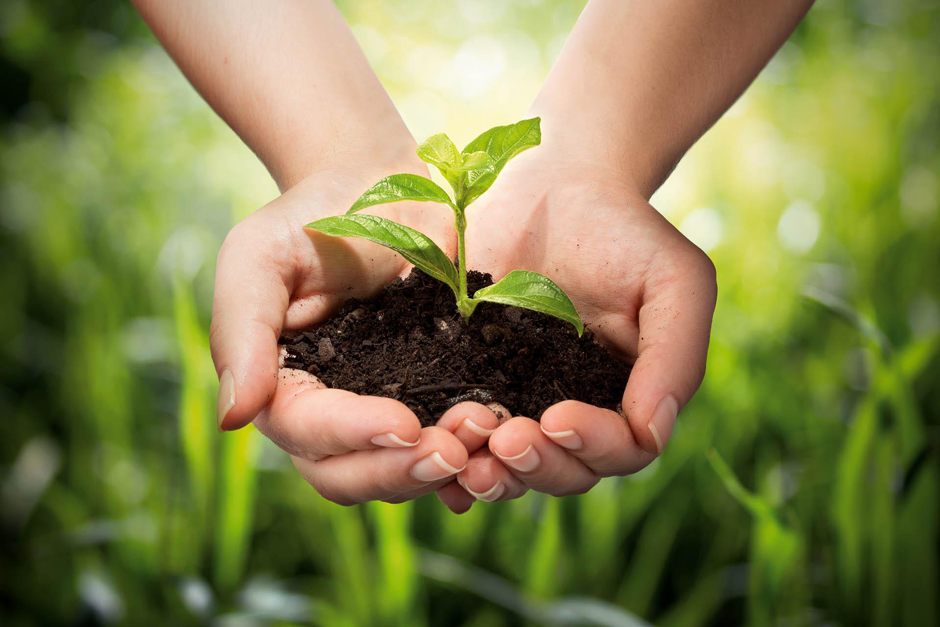PANMOL – patentierte Vitalstoffe aus Pflanzen und Erde