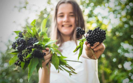 Bioaktive Pflanzenstoffe stärken die Abwehrkraft
